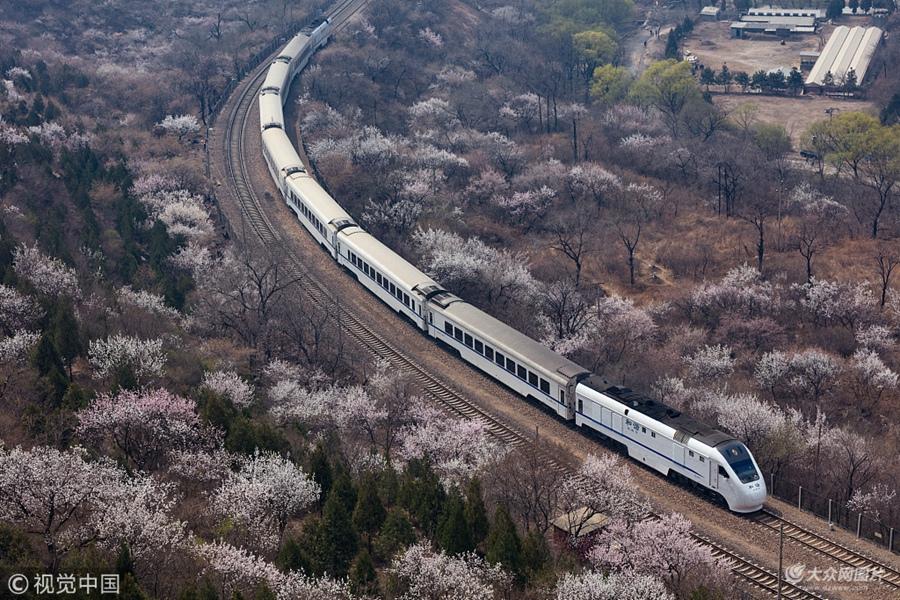 北京:居庸关桃花盛开 列车穿行其中