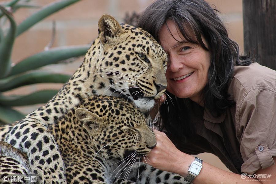 50岁女子建猫科动物保护区 与5只豹子朝夕相处