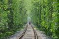 2018年4月27日,位于南京市江宁区的爱情隧道周围枝繁叶茂,绿油油的枝叶形成一望无尽的拱门,充满了诗情画意,吸引不少游客慕名前去拍照。