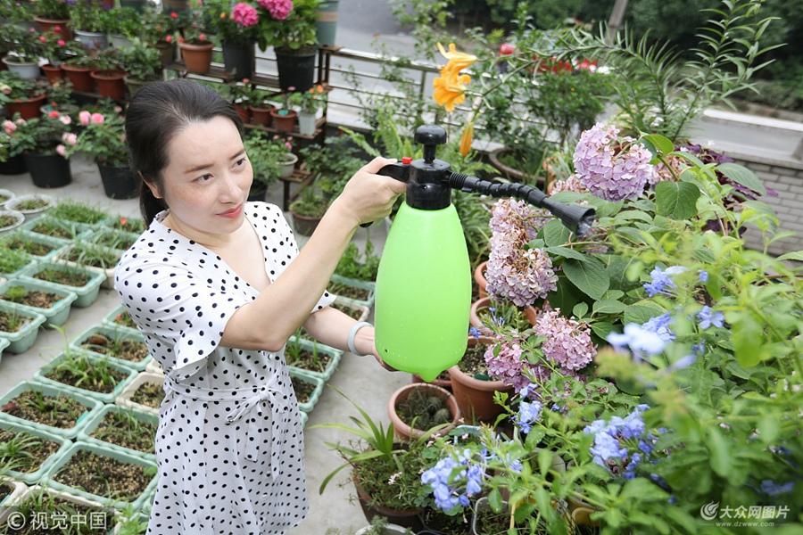 找老公不如养花 杭州姑娘用四年时间把家打造成花园