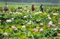 :2018年6月23日至24日,盛夏时节,京杭大运河畔的山东省枣庄市台儿庄运河湿地荷花绽放、鱼鹅嬉戏,游人畅游其中如仙境一般,勾勒出一幅幅人与自然和谐共生的美好画卷。