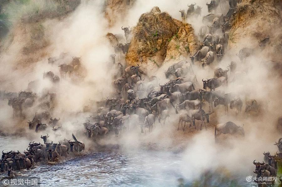 震撼!实拍非洲8万牛羚大军迁徙 尘土飞扬勇渡致命河流