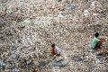 2018年10月16日下午,广东惠州,惠东县铁涌镇赤岸村的考洲洋沿岸一片忙碌景象。海堤上一排排简易的遮阳棚下,数百位村民用金属工具撬开蚝壳分拣蚝肉,叮叮当当好不热闹。