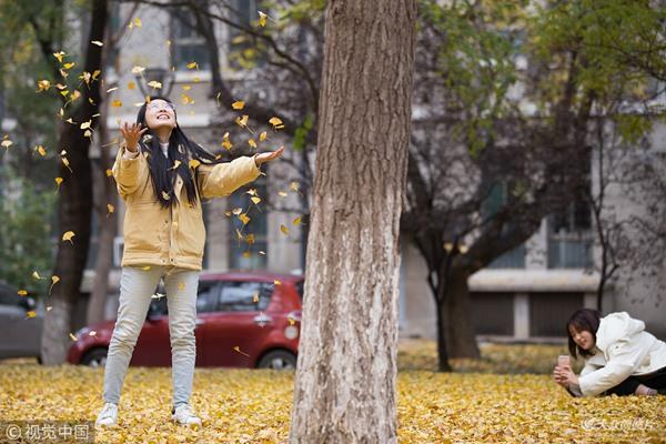 山大校园遍地金黄 大人、小孩拍照享欢乐