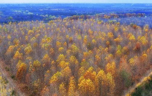 初冬的胶州市万亩林场美如画卷