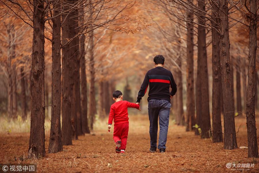 日照:初冬时节 森林公园杉树美如画