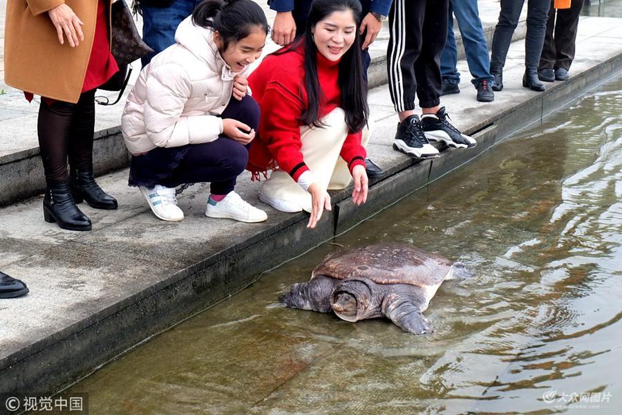 68斤重野生甲鱼被放归大自然