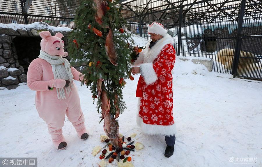 """俄罗斯动物园北极熊得到""""特供""""鱼肉圣诞树 啃食""""饰品""""不亦乐乎"""