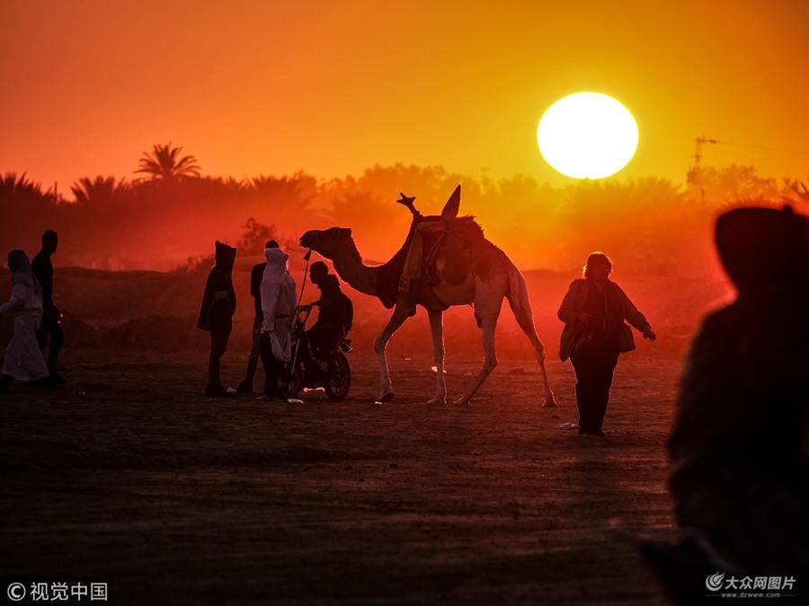 第51届撒哈拉沙漠节在突尼斯举行