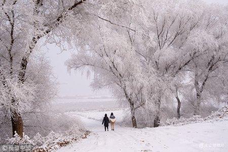2019年1月13日,河北雄安新区白洋淀大雾弥漫,迎来了今年的第一场雾凇自然景观,美若童话世界。