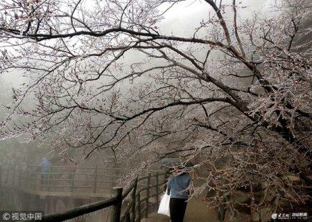 2019年4月9日,山�|省�R沂市沂蒙山银座天蒙旅�[区的冰冻景观。