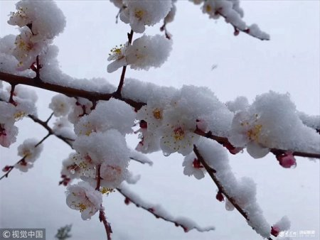 2019年4月9日,白雪覆盖下的百花上景色。当日,京城普降雨雪天,偏远山区更是下起了雪,银装素裹景色迷人。