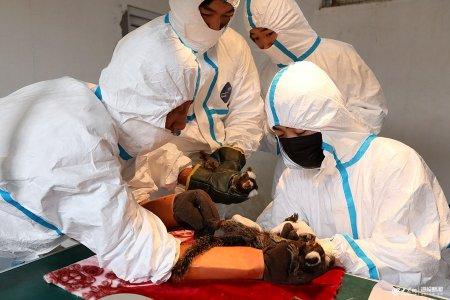 2019年5月14日,山�|威海荣成海关对已度过适应期的80只狨猴,进行血液、粪便采集及皮试工作。