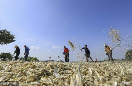 2019年8月20日,江苏省淮安市洪泽区西顺河镇洪祥村渔民在打包毛刀鱼。
