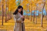 11月9日,在济南黄河大坝南岸,大片的银杏叶呈现出醉人的金黄色,开车路过的市民无不被吸引,不少市民更是闻名而来,尤其是周末时间,野餐、拍照、赏景,好不乐乎。