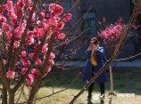 5、惊蛰,济南的花开了,引游人驻足拍照.JPG