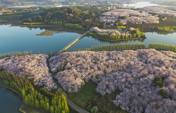 贵阳:贵安樱花园每天吸引游客十余万.jpg